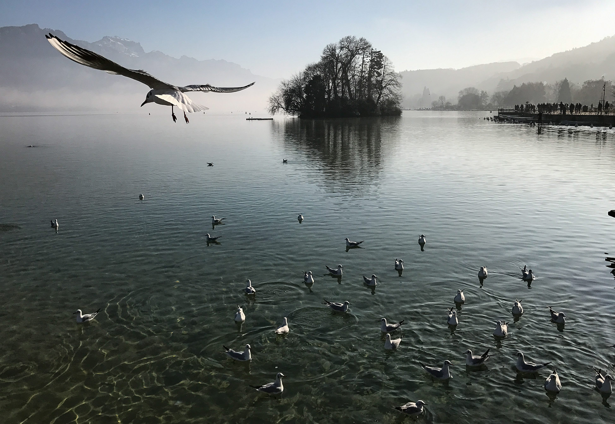 Seagulls fly above Lake Annecy in the town of Annecy, France, 01 January 2017 (issued 03 January). Annecy is a town in the Rhone-Alpes region of southeastern France. It is a popular tourist destination with many castles and cathedrals. It lies on the northern tip of Lake Annecy.  EPA/ROMAN PILIPEY