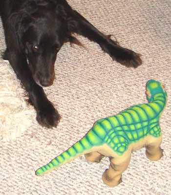 Our dog was wary of Pleo